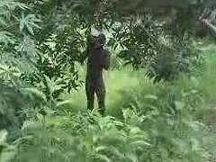 real african amateur fuck exceeding hammer away bush part 2